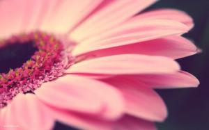 Flower-flowers-32348112-1680-1050
